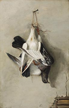 Passenger pigeon painting by Alexander Pope