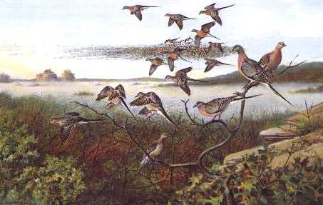 "Owen Gromme's ""Distant Thunder"" painting of passenger pigeons"