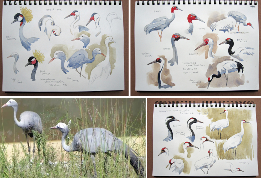 van dusen sketches and blue cranes