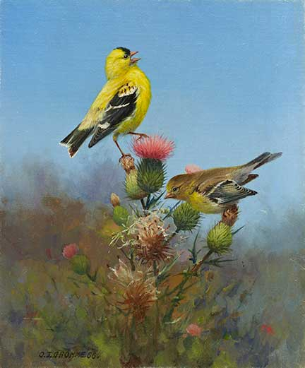 Gromme-goldfinches